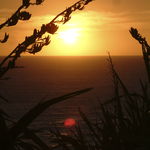 Hawera Sunset