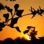 Hot Florida Sunset