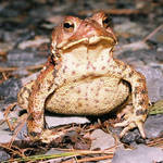 Surprise Toad its Light in the Night Time