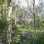 Scenic Swamp