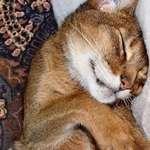 sweet repose