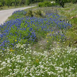 Texas Spring Flowers