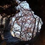 Through a Tree Trunk