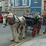 Tenby Touring horse