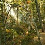 Arch To The Woods