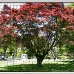 Tiled Tree