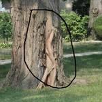 Tree Legs