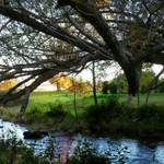 Amys Tree