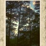 Lake Gaston Pines, VA
