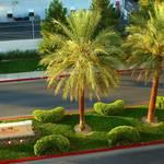 Mandaly Palms