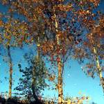 upside down tree reflections