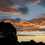 Eucalyptus Silloutte Sunset