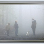 Foggy Companions