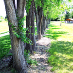 Line of trees