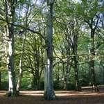Borthwood Glade