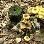Woodland mushrooms