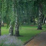 Tussocks Garden