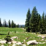 Uinta Meadow