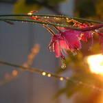 Unkown Flower 2