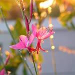 Unkown Flower 3