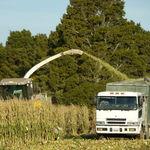 Chopping Maize
