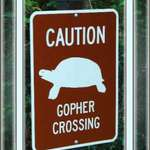 &quot;Gopher&quot; Crossing?