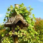 Vine Covered Birdfeeder