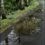 Walkway Reflections