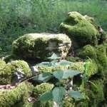 Damp Moss Wall
