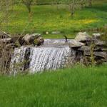 Dandelion Falls