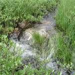 Gurgling Water