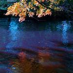 reflections of autumn 2