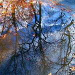 Puddle reflections 2