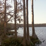 Spanish Moss and Cypress Trees