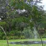 Mimosa Fountain