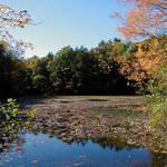 Waterlily pond, Autumn