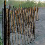 weathered dune fence