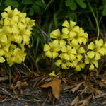 Perennial weeds and fallen  leaves