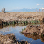 Wetlands and Bird Overlook Tower