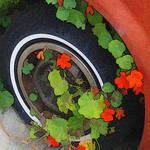Wheel of Flowers