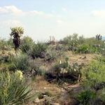 A wild desert garden