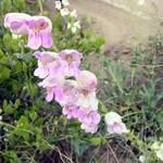 Wildflower 01