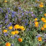 Wildflowers 04