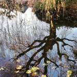 Tree of Life  Reflection  - Weeping Willow