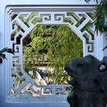 White Window, Green Bamboo