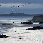 Wings over Piedras Blancas Lighthouse Central CA Coast