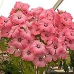 Floral Display ..