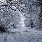 Snowy pathway