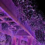 Wisteria Revisited, Purple Dreams