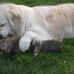 Wood Thief #2
